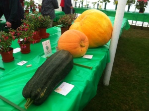 GIANT vegetables!